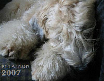 Ella-tion 2007 12-Month Calendar